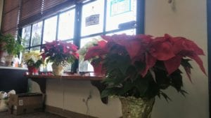 Poinsettias 12212015